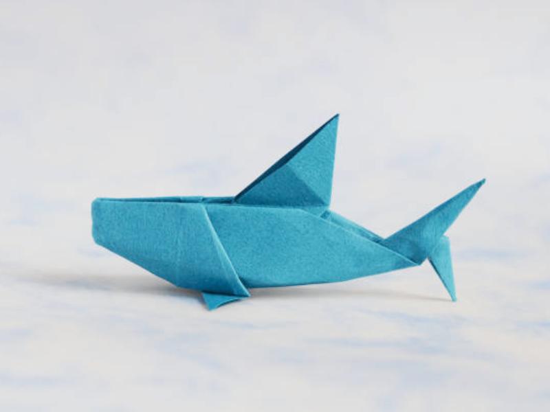 Requin et concepts